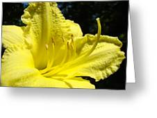 Lily Flower Artwork Yellow Lilies 1 Giclee Art Prints Baslee Troutman Greeting Card