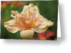Lily Flower - Daylily Greeting Card