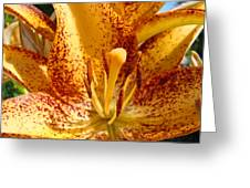 Lily Flower Macro Orange Lilies Floral Art Print Baslee Troutman Greeting Card