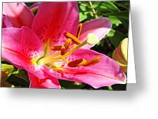 Lily Flower Pink Lilies Giclee Art Prints Baslee Troutman Greeting Card