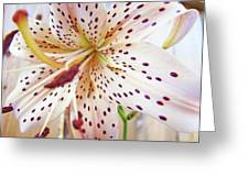 Lily Flower White Lilies Art Prints Baslee Troutman Greeting Card