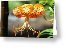 Lily Flowers Art Orange Tiger Lilies Giclee Baslee Troutman Greeting Card