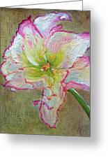 Lily From Paradise Greeting Card