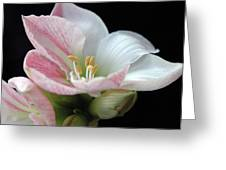 Lily Greeting Card by Ginette Thibault