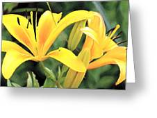 Lily - Id 16217-152018-5631 Greeting Card