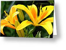 Lily - Id 16217-152041-9998 Greeting Card