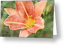 Lily In A Haze Greeting Card