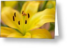 Lily In Close-up Greeting Card