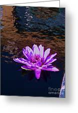 Lily In Pond Greeting Card