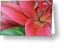 Lily In Rain Greeting Card