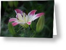 Lily In The Dark Greeting Card