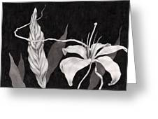 Lily In The Night Greeting Card