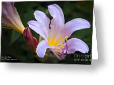 Lily In The Rain By Flower Photographer David Perry Lawrence Greeting Card
