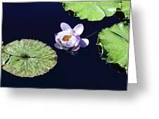 Lily Love II Greeting Card