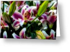 Lily Of The Field Greeting Card
