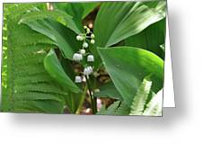 Lily Of The Valley II Greeting Card