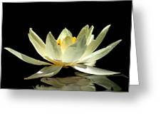 Lily On Black Greeting Card