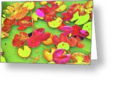 Lily Pad Faces Greeting Card