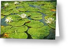 Lily Pad Flowers Greeting Card