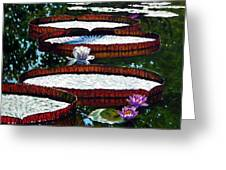 Lily Pad Highlights Greeting Card