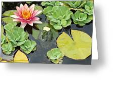 Lily Pad Lunch Greeting Card