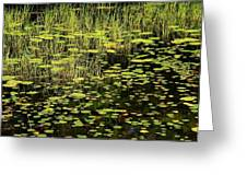 Lily Pad Place Greeting Card
