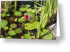 Lily Pad Pond In High Noon Sun Greeting Card