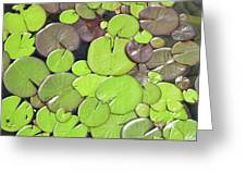 Lily Pads #1 Greeting Card