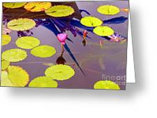 Lily Pads 2 Greeting Card