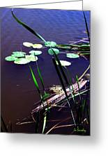 Lily Pads And Reeds Greeting Card