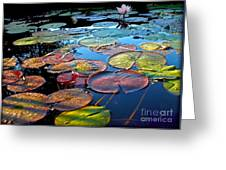 Lily Pads At Sunset Greeting Card