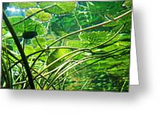 Lily Pads I Greeting Card