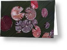 Lily Pads In The Pond Greeting Card