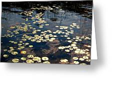 Lily Pads In Winthrop Maine Greeting Card