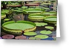The Lily Pond Greeting Card