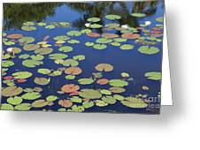 Lily Pads On Blue Pond Greeting Card
