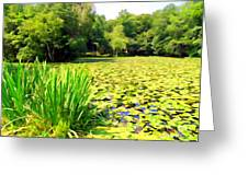 Lily Pond #4 Greeting Card