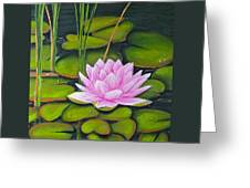 Lily Pond And Pink Greeting Card