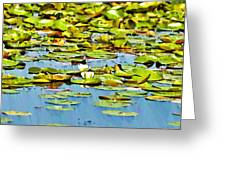 Lily Pond Greeting Card