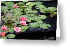 Lily Pond Monet Greeting Card