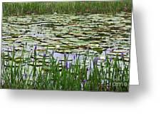 Lily Pond Panorama Greeting Card