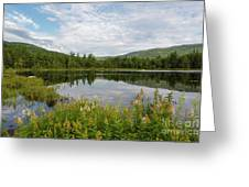 Lily Pond - White Mountains, New Hampshire Greeting Card