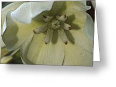Lily Poster Greeting Card