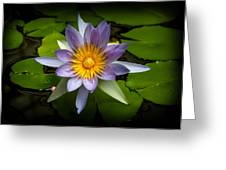 Lily Queen Of The Pond  Greeting Card