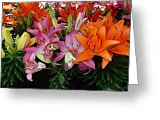 Lily Radiance Greeting Card