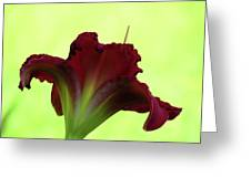 Lily Red On Yellow Green - Daylily Greeting Card
