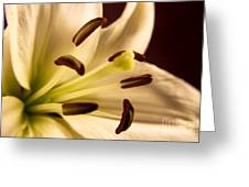 Lily Series 2 Greeting Card