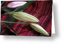 Lily Stem On Red Brocade Greeting Card