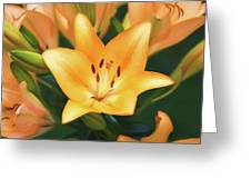 Lily Greeting Card by Steven  Michael