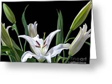 A White Oriental Lily Surrounded Greeting Card
